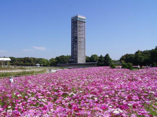 滨松花卉公园