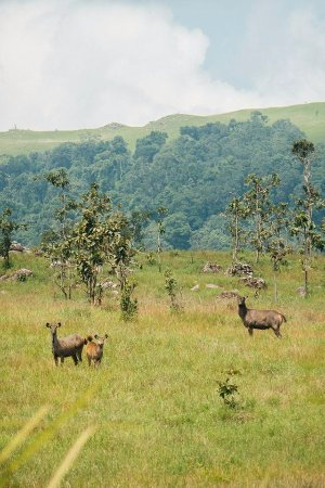 Banlung, Cambodia: Seven day trekking in Virachey National Park