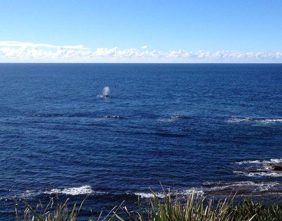 Warden Head Light: Whale spout