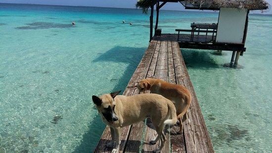 Manihi, Französisch-Polynesien: IMG-20170824-WA0082_large.jpg
