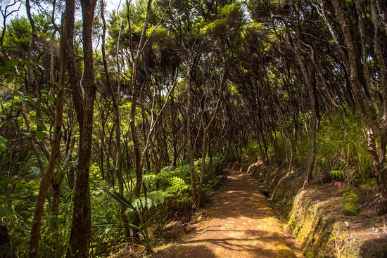 Paihia, New Zealand: Take a walk on the bush tracks and discover the native NZ birdsong on the island wildlife sanctu