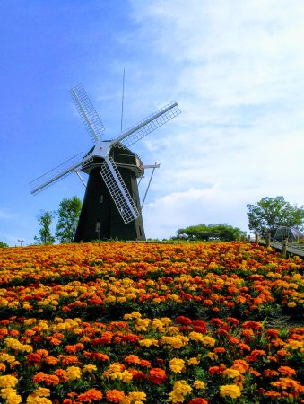 Flower Expo Memorial Park Tsurumi Ryokuchi