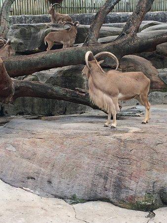 Mosman, ออสเตรเลีย: safari zone