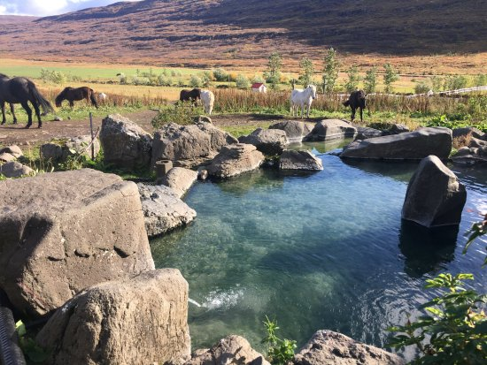 Heydalur Guesthouse: hot tub and the horses