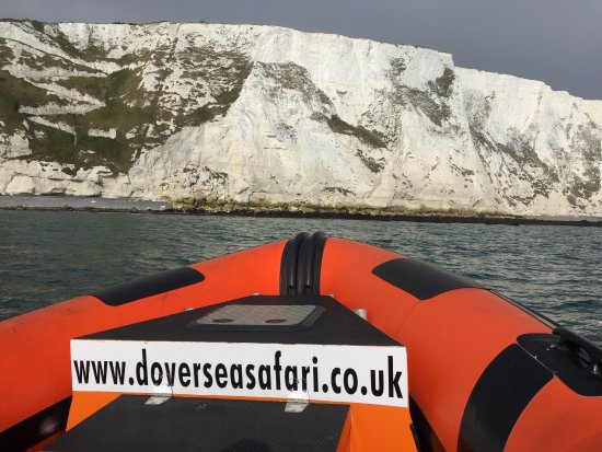 Dover Sea Safari : photo1.jpg