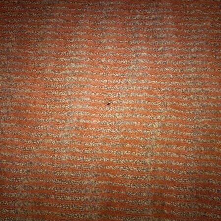 Rancho Cordova, Californie : A roach in our room!