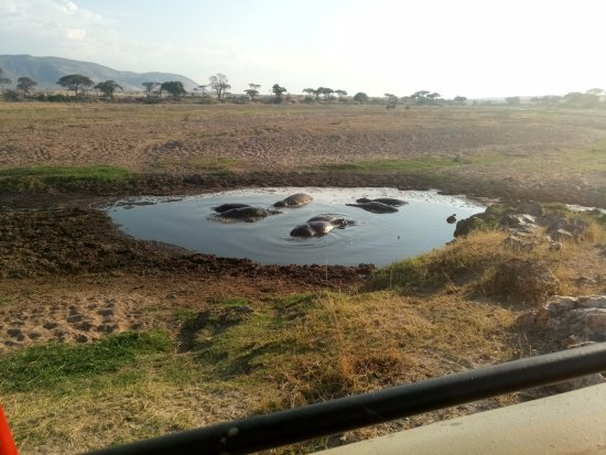 Morogoro, Tanzanya: Hippo watching in Ruaha