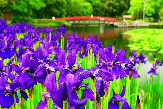 Miyakonojo, ญี่ปุ่น: 初夏の彩・その1