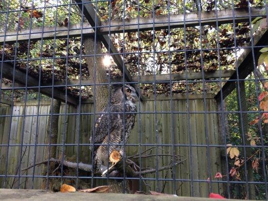 Zoo Ecomuseum : grand duke