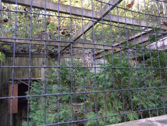 Zoo Ecomuseum : owl