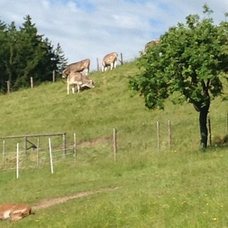 Peiting, Deutschland: Äng bakom gården