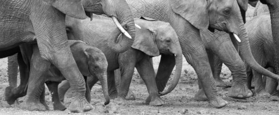 Tarangire National Park, Tanzania: Elephants - they come in all different sizes...