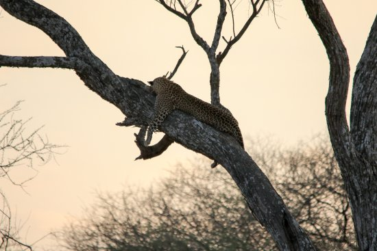Tarangire National Park, Tanzania: Just hanging here waiting for the hunt I am going on tonight....