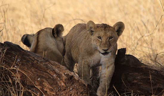 Tarangire National Park, تنزانيا: Hey - who are you guys??