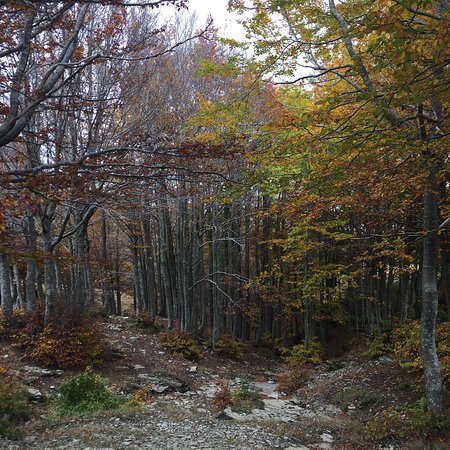 Loro Ciuffenna, Italien: Park at the Area di Sosta Croce, then it's just a nice walk up to the top. You can either walk t