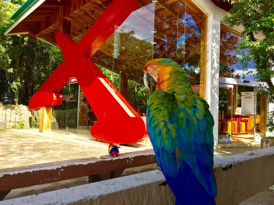 Santa Elena, Costa Rica: photo1.jpg