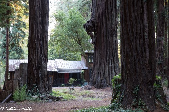 Walk amoung the redwoods down the road - this building was also built by The Madrones