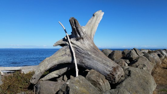 Port Angeles, WA: Driftwood