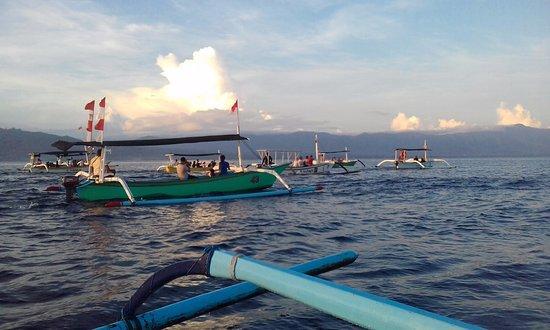 Lovina Beach, Indonesia: Dolphin watching