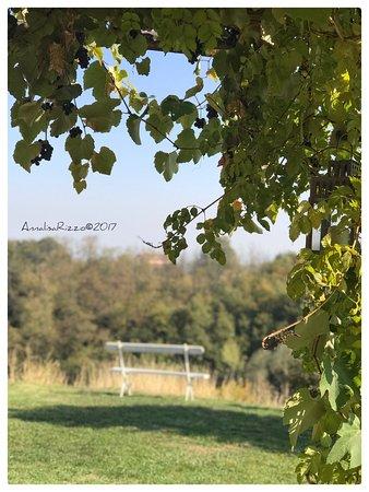 Le Colline Della Luna: photo9.jpg