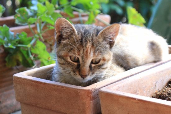 San Giovanni d'Asso, Italia: One of Roberto's rescued kittens