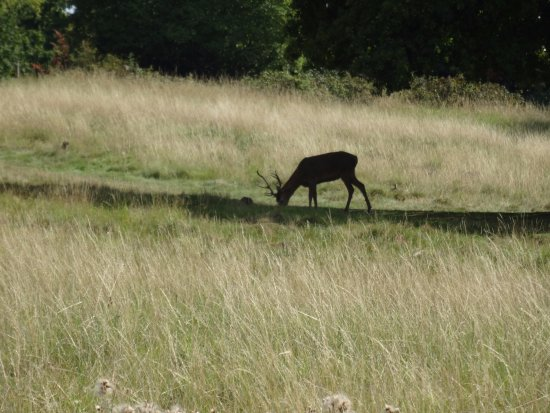 Richmond-upon-Thames, UK: Wildlife 1
