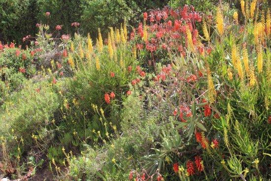 Calitzdorp, Sudáfrica: Spring flowers