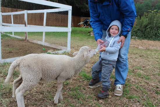 Calitzdorp, Νότια Αφρική: Guests can interact with farm pets