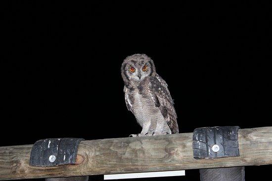 Calitzdorp, Sudáfrica: Experience the bird life