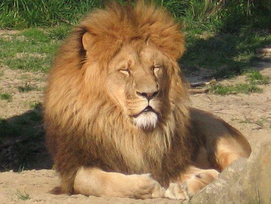 Zlin, Tjeckien: lion