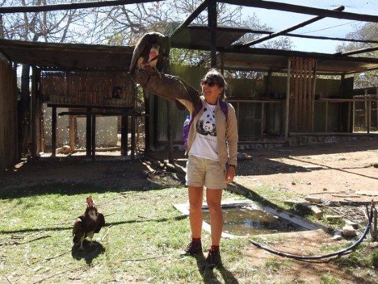 Hoedspruit, แอฟริกาใต้: Vulture