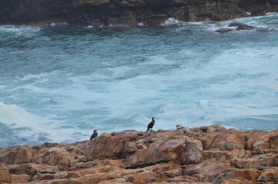 Plettenberg Bay, Republika Południowej Afryki: photo8.jpg