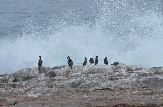 Plettenberg Bay, Republika Południowej Afryki: photo9.jpg