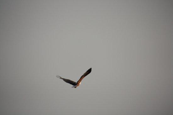 St Lucia, Afrique du Sud : fish eagle