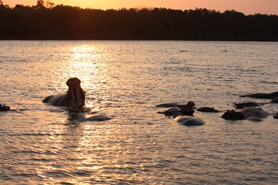 St Lucia, Afrique du Sud : hippo's at sunset
