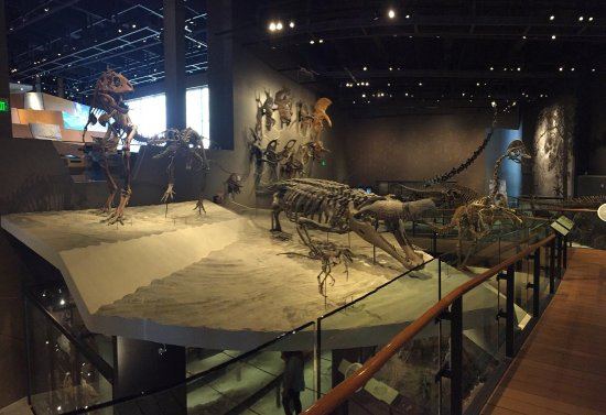 Foyer Museum Utah : The dinosaur hall picture of natural history museum