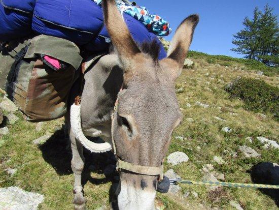 Valdeblore, Francia: Un autre ânes pour changer