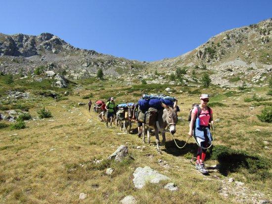 Valdeblore, Francia: Le groupe et les ânes à la conquête du chemin