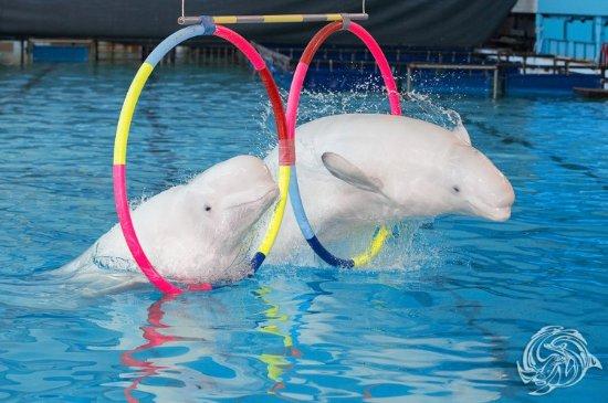 Картинки по запросу питер delfinari