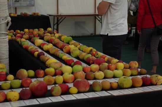 Dereham, UK: some of the varieties of apple on show..
