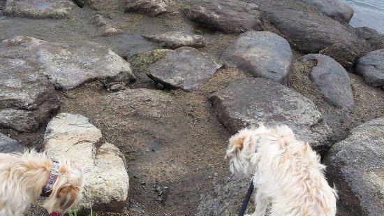 Cascade, Айдахо: Our pups exploring the river bank