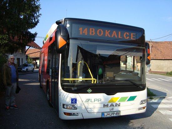 LPP Buses