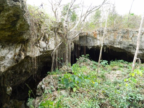 Saturno Cave: Plant life outside the cave.