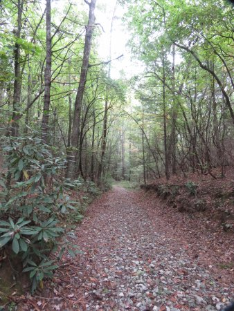 Cleveland, SC: Woodland path in Ashmore Heritage Preserve