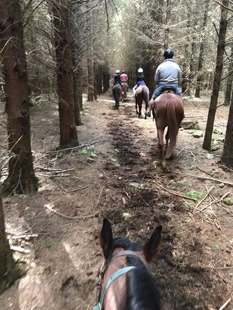 Hanmer Springs, New Zealand: into the woods