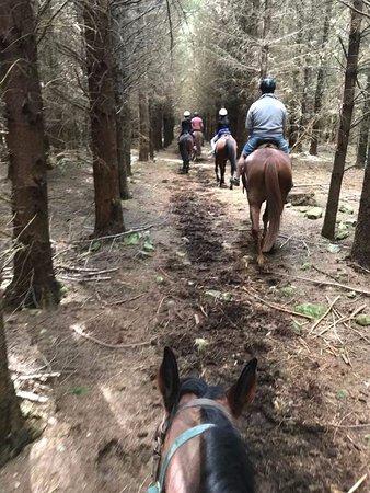 Hanmer Springs, Neuseeland: into the woods
