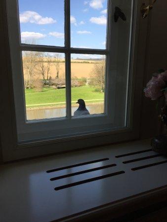 """Aerzen, Tyskland: Blick aus dem Zimmer mit einem """"Gast"""""""