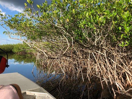 Jungle Erv's Everglades Airboat Tours: photo0.jpg