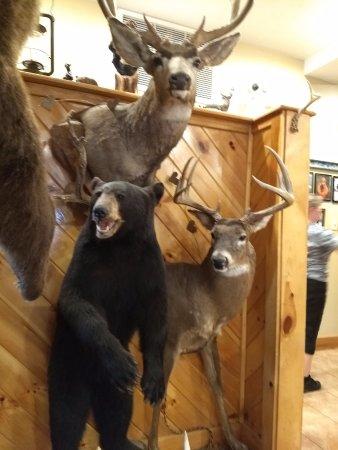 Lancaster, MA: animais empalhados