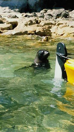 Marahau, New Zealand: Seal Pup